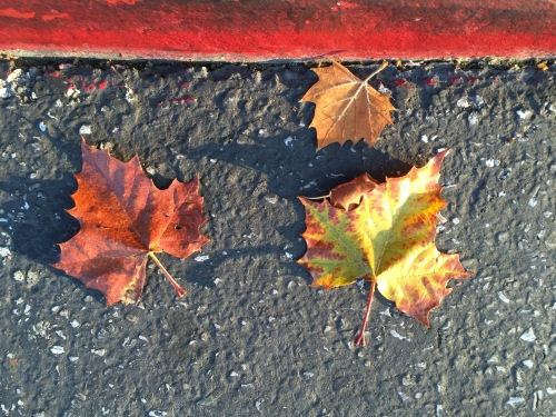 Photograph: 3 Leaves in the Street after Pickup