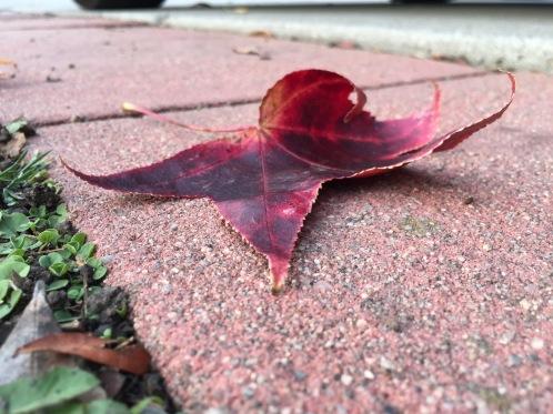 Photograph: Red Leaf on Pink Sidewalk
