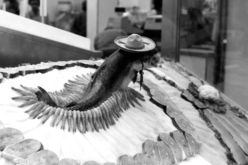 Photograph: Fish Wearing a Sombrero on Ice