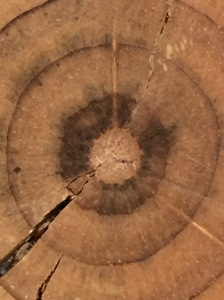 Photograph: Center of Tree Cross Section