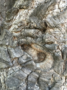 Photograph: Tree Bark (Unknown)