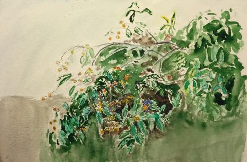 Watercolor: Loquat Tree