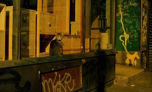 Photograph: 1990s New York Graffiti and Cat