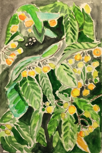Watercolor: Detail of Loquat Leaves and Fruit
