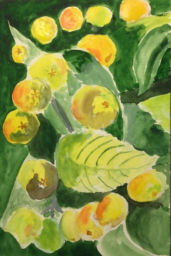 Watercolor: Nespoli Fruit
