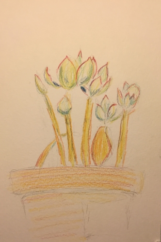 Watercolor Pencils: Succulent
