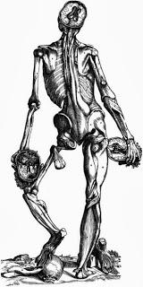 Vesalius Brain Illustration
