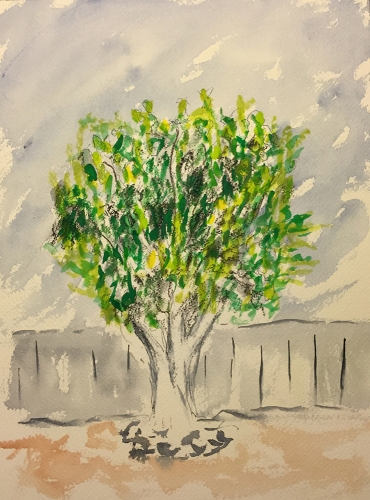 Watercolor, Charcoal, Gouache: Fig Tree