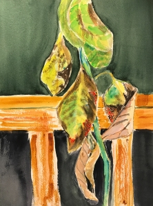 Watercolor: Representation - Avocado Plant in Decline