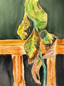 Watercolor: Representation - Avocado Plant in Decline