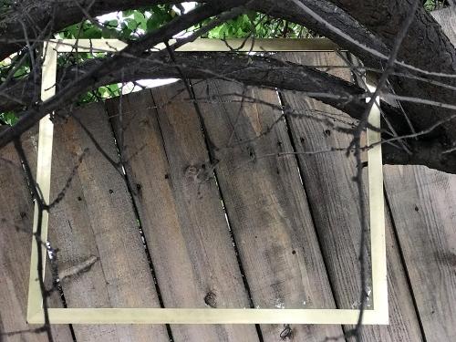 Photograph: Framing an Image 052317