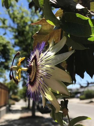 Photograph: Mystery Flower 053117