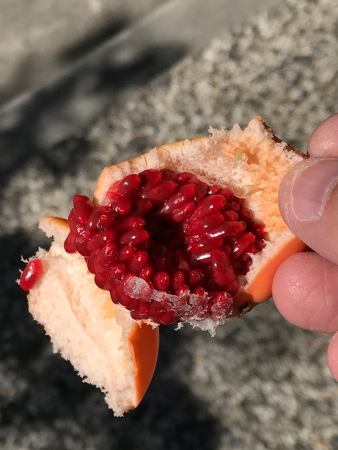 Photograph: Passion Fruit Insides 061317
