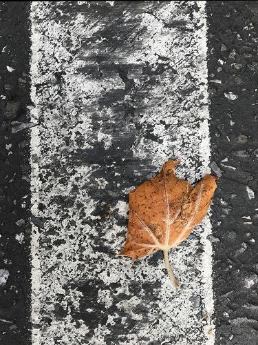 Photograph: Street Leaf