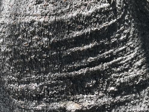 Photograph: Hide Texture 072717