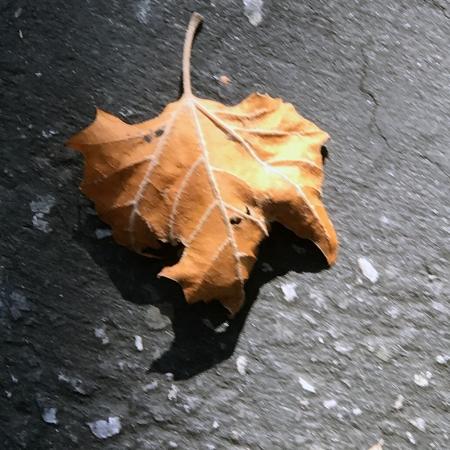 Photography: Autumn Leaf 091417