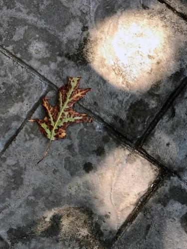 Photography: Leaf on Slate - 070417