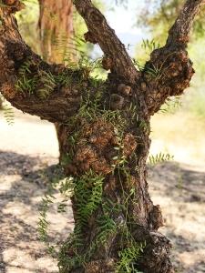 Photograph: Gnarley Tree