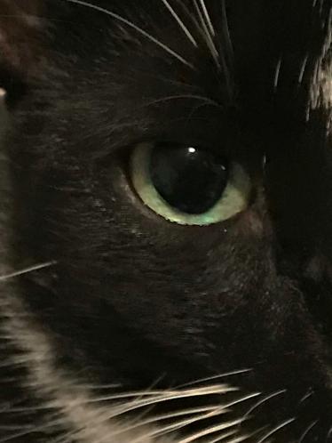Family Snaps: Cat's Eye on Night Before Christmas 122417