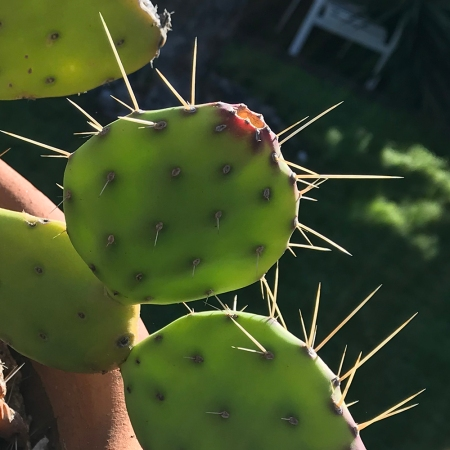 Photography: Cactus in February 020418