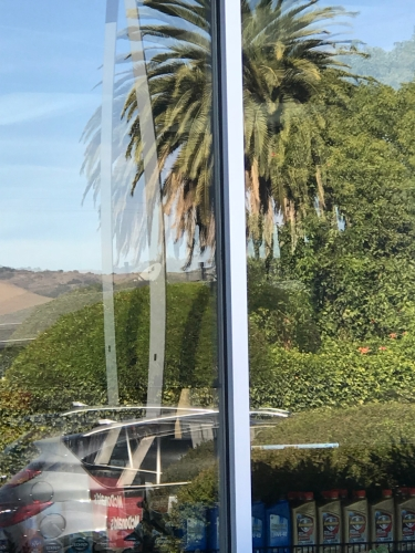 Photography: Street Photography - Palm Tree and Car, Through the Looking Glass
