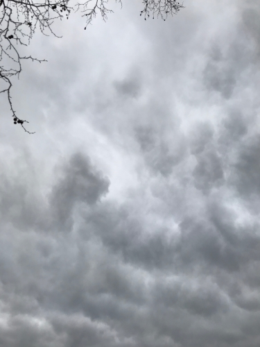 Photography: Sky Photography - Grey Sky and Twiggy Branches