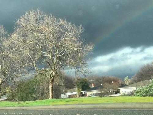 Photography: Sky Photography - Scraggy Tree and Rainbow on Dark Field