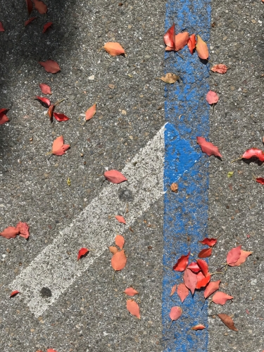 Photography: Street Photography - Blue Line, White Stripe, Red Leaves and Shadow