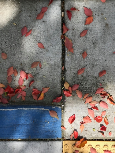 Photography: Street Photography - Blue, Yellow, Leaves and Shadows
