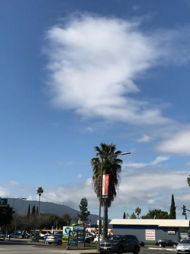 Photography: Sky Photography - Palm Tree's Sudden Idea