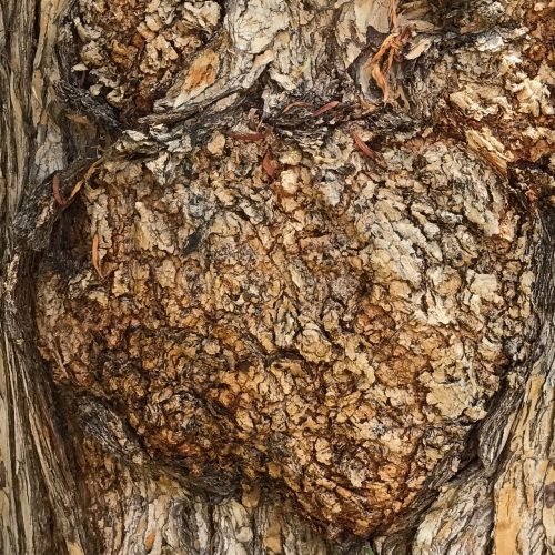 Photography: Back Yard Photography - Tree Bark Burl Texture