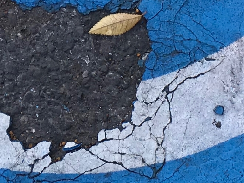 Photography: Street Photography - Serrated Leaf Amidst Cracked Paint and Pavement