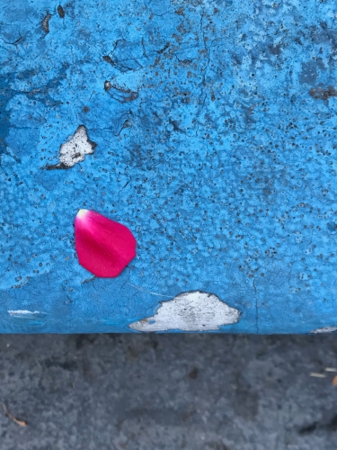 Photography: Street Photography - Red Flower Petal on Textured Blue Curb