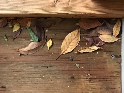 Photography: Backyard Photography - Leaves in a Corner