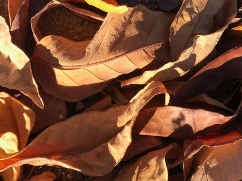 Photography: Backyard Photography - Pile of Leaves