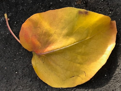 Photography: Street Photography - The Beauty of Leaves Never Gets Old