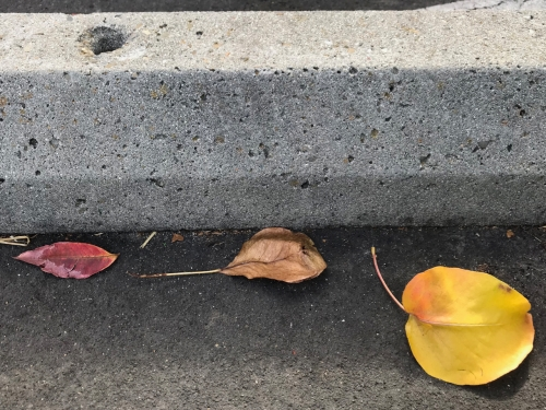 Photography: Street Photography - Three Leaves in Color