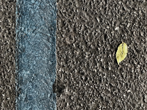 Photography: Street Photography - Green Leaf, Blue Line