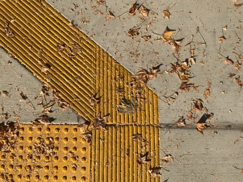 Photography: Street Photography - Leafy Design