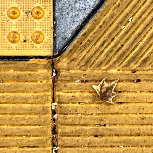Photography: Street Photography - Organic Leaf in Yellow Geometric Matrix