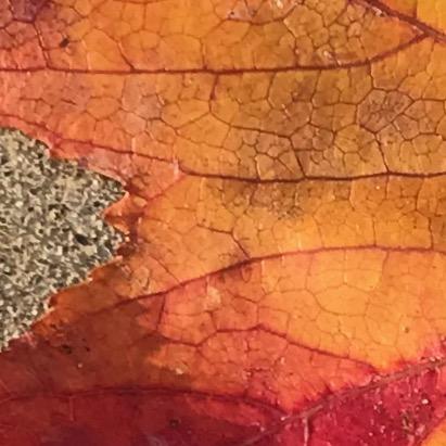 Photography: Back Yard Photography - Bloodshot Leaf Veins