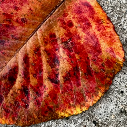 Photography: Backyard Photography - Decay in Stages