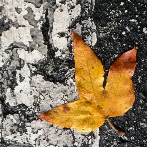 Photography: Street Photography - Leaf on a Rumpled Background