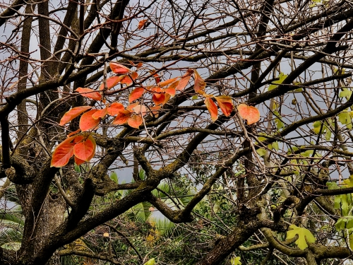 Photography: Backyard Photography - Orange Leaf Arc