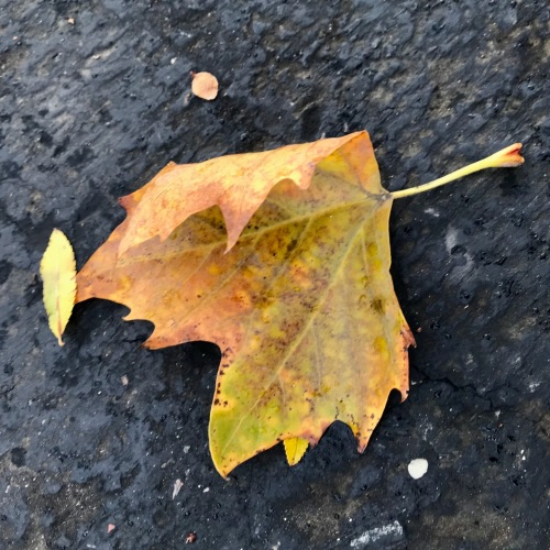 Photography: Back Yard Photography - Overleaf