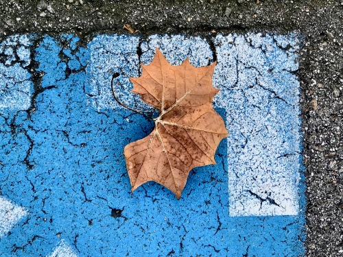 Photography: Street Photography - Orange Leaf on Complementary Background
