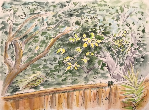Watercolor: Backyard - Yellow Leaves in the Back Yard