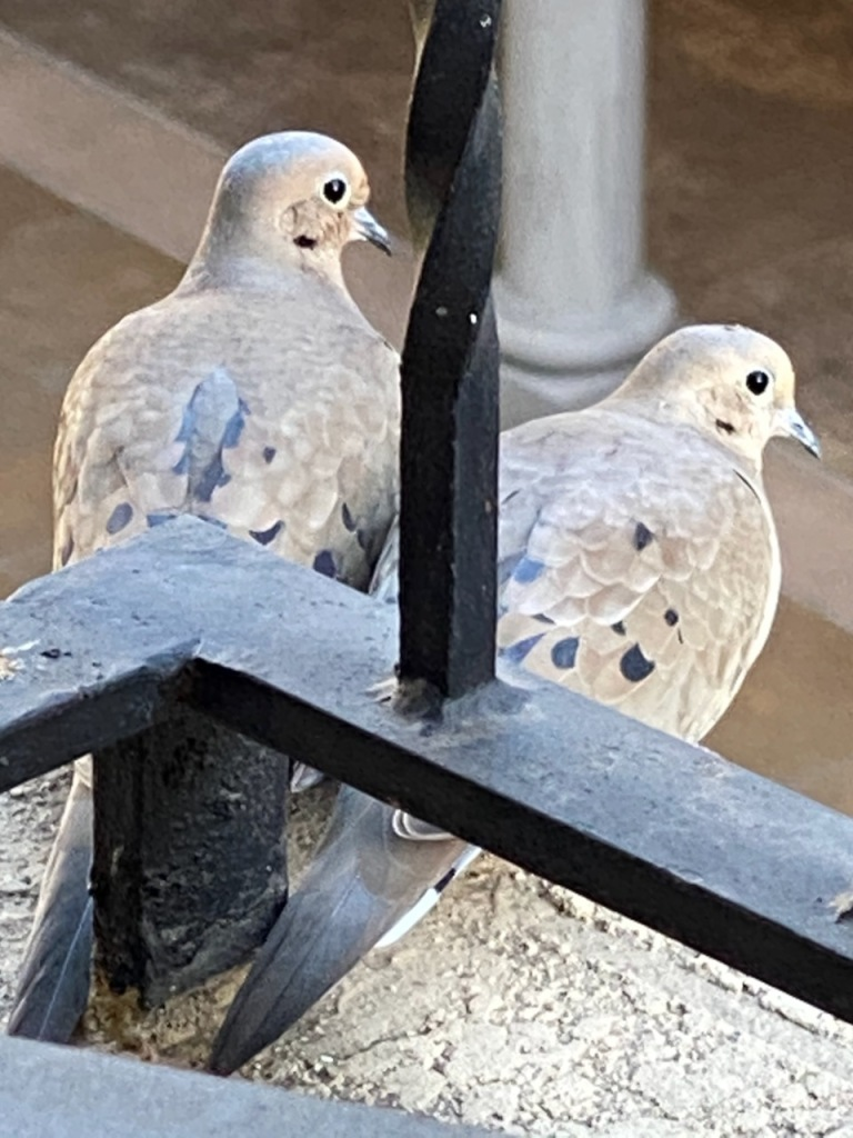 Street Photography: Two Turtle Doves