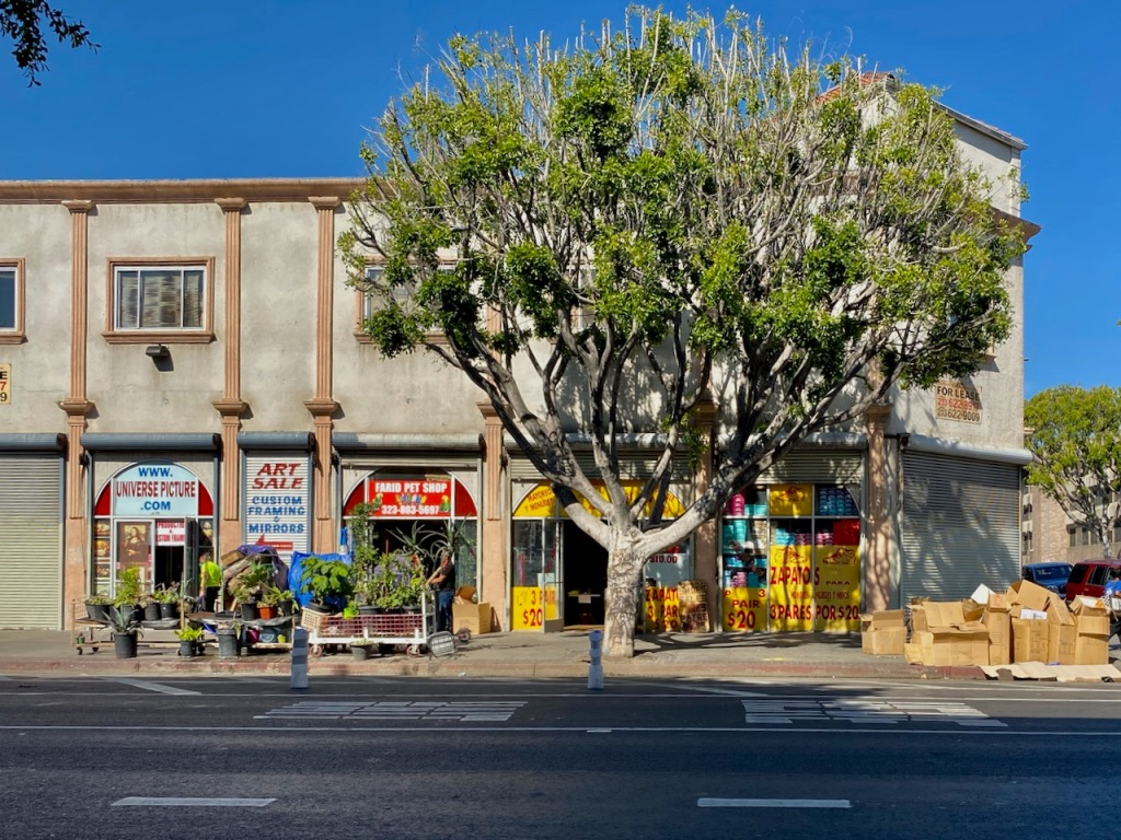 Street Photography: Corner Stores and Tree