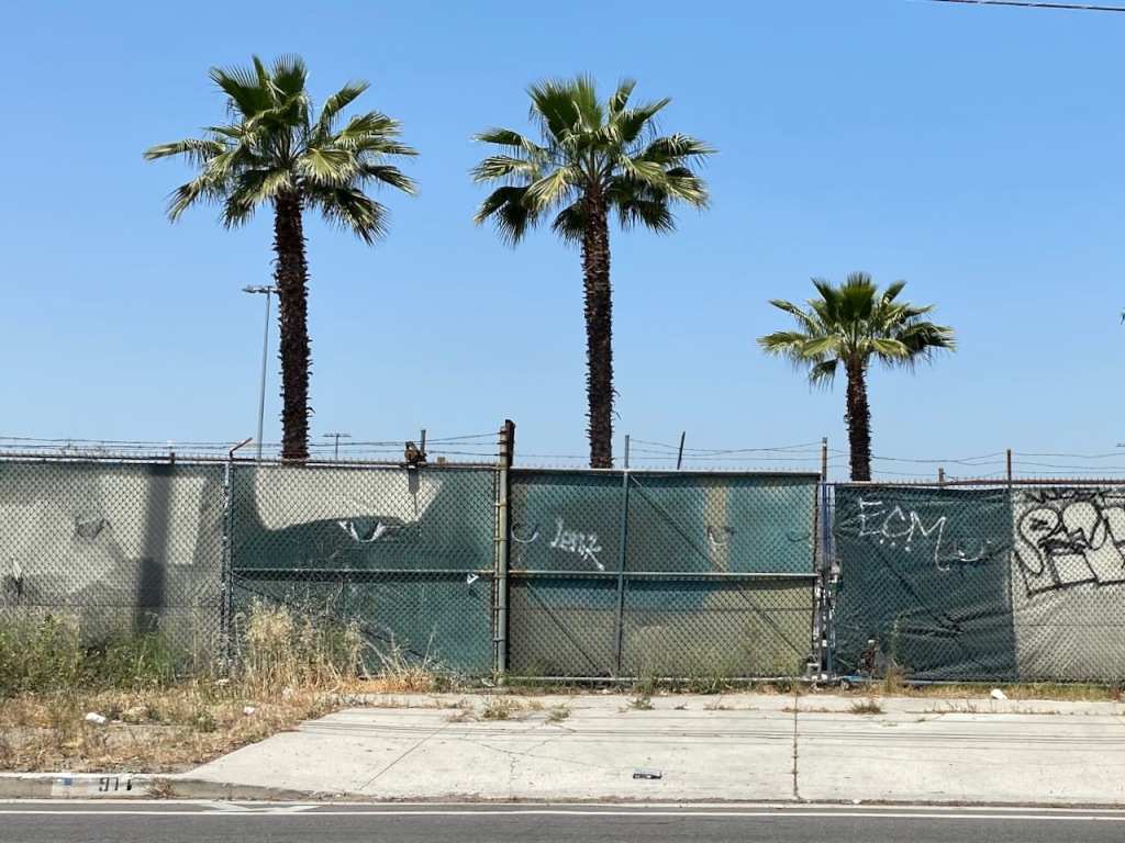 Street Photography: Fenced-In Palm Family